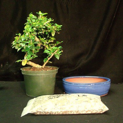 Bonsai Tree Kits