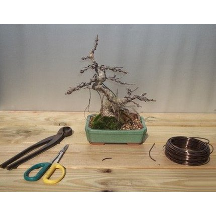 Introduction To Bonsai Classes
