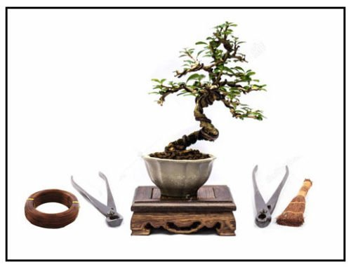 Bonsai Classes & Workshops